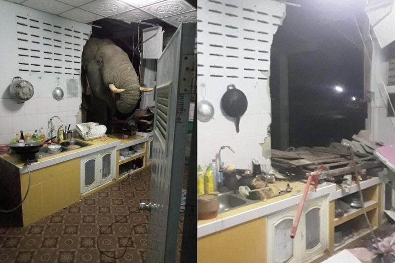 ▲原PO透露,這隻大象不是第一次了,這2個月每天都來覓食,讓她們相當困擾(圖/翻攝自《รัชฎาวรรณ