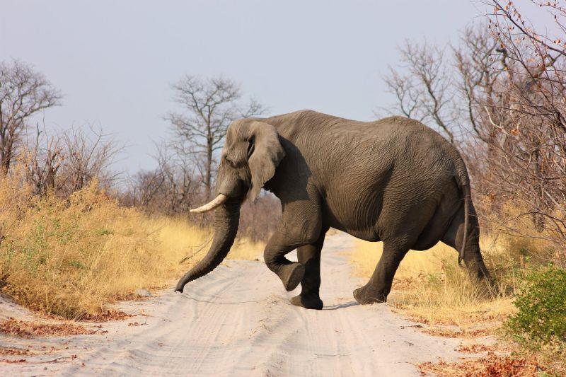 ▲泰國有網友分享,一隻大象直接撞壞牆壁,將頭伸進廚房找食物。(示意圖/翻攝自《pexels》 )