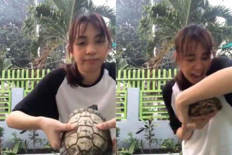 ▲菲律賓有位女子想拍片炫耀寵物龜,沒想到過程中,卻被寵物龜狠狠咬一口,讓她當場崩潰尖叫。(圖/翻攝自AP美聯社/ Newsflare )
