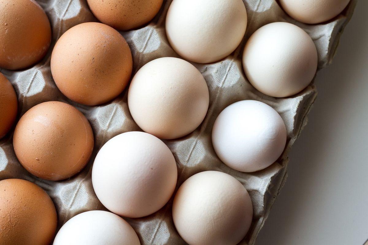 為何蛋黃有黃色、橘色之分?美女營養師解析「背後原因」