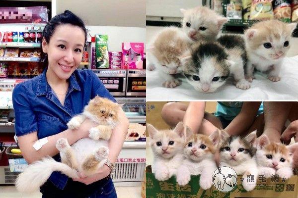 ▲Lisa在便利商店看見貓媽媽「咪咪」後一見鍾情,後來牠生了四隻小貓,就領養了咪咪與三花貓噠麗,其他三隻橘白公貓也全數送養。(圖/粉專噠麗&小咪之小咪家族授權提供)