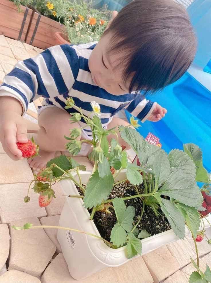 ▲▼辻希美(上圖左)在家與孩子開心種蔬菜水果。(圖/辻希美IG)