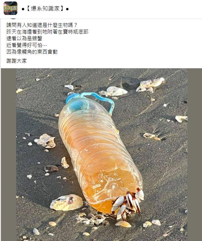 ▲一名男網友在臉書社團透露,自己在海邊驚見一個寶特瓶底部被「數隻神秘觸角」附著,讓他感到很可怕又好奇,並拍照PO網求解,結果內行一看立刻解答,直指「牠是鯨魚與海龜的天敵」。(圖/翻攝自臉書社團「爆系知識家」)