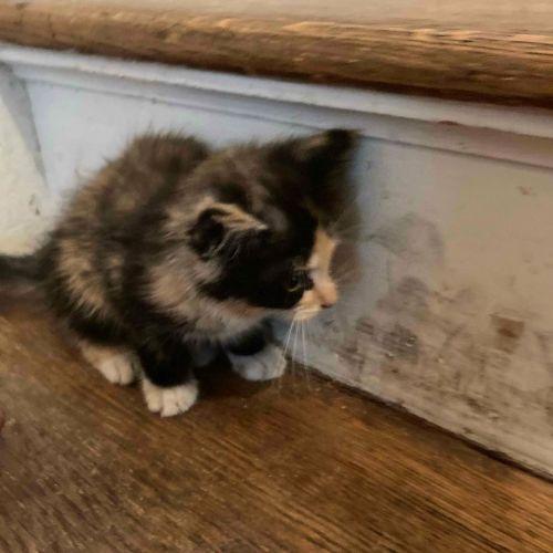 ▲貓貓:以後我就叫安吉莉卡了!(圖/Instagram@littlewanderersnyc)