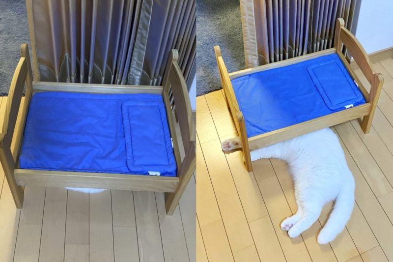 ▲日本一名貓奴買了玩具床,貓咪卻選擇「睡下舖」。(圖/twitter @s_sekko)