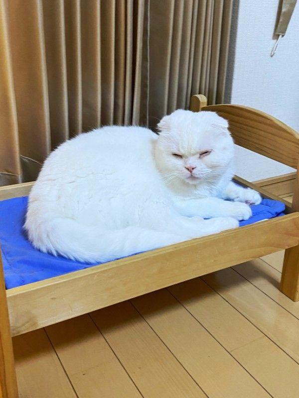 ▲這天推主在知名家具店買了一張玩具小床,想讓Muku在上面好好睡覺,Muku在上面躺了一會兒之後,殊不知……(圖/twitter