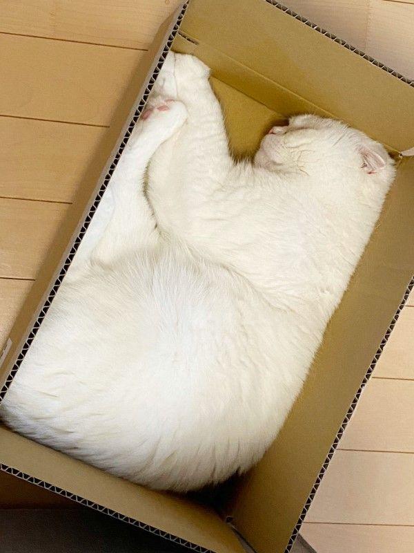 ▲然後就去睡在紙箱裡!(圖/twitter