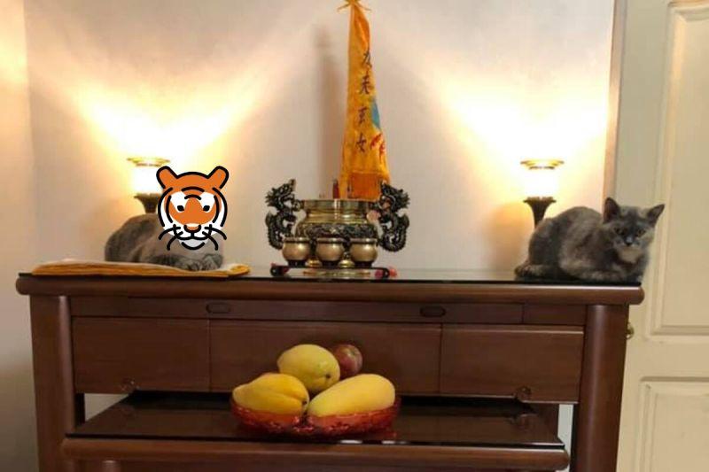 ▲兩貓突然跳上神桌,一臉嚴肅地當起左右護法。(圖/網友李沂霈授權提供)