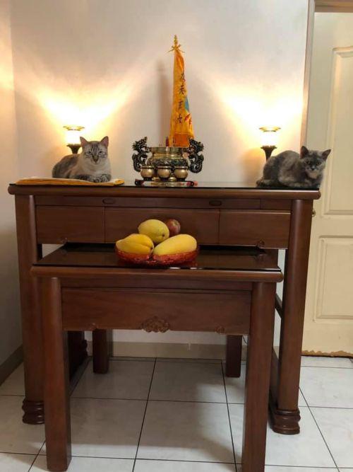 ▲貓咪趴的位子剛好一左一右,彷彿牠們不是上來搗亂,而是在保護令旗。(圖/網友李沂霈授權提供)