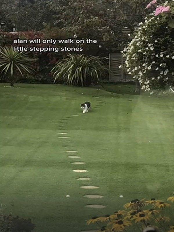 ▲黑白貓「艾倫」在自家花園散步時,總是堅持要踩著石板路行走。(影/美聯社