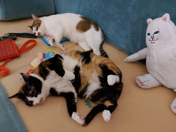 ▲累翻的兩隻貓:「何時才要去上課啦?」。(圖/IG帳號@eileen2328授權)