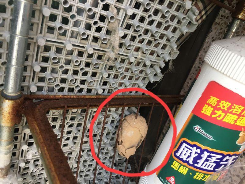 ▲網友發現自家陽台被插了一顆「破裂茶葉蛋」,用水沖都沖不掉。(圖/翻攝自《爆廢公社》臉書)