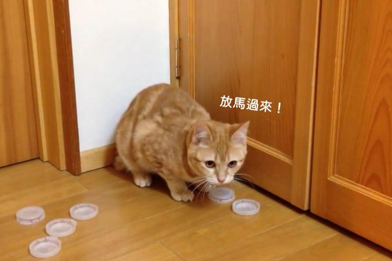 ▲貓咪化身天才捕手,奴才拋去的瓶蓋一個不漏接!(圖/AP+ Jukin Media)