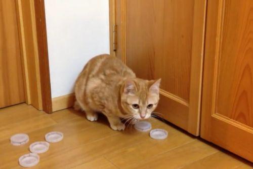 ▲看地上滿滿的瓶蓋,都是橘貓成功接瓶蓋的證明呢!(圖/AP+