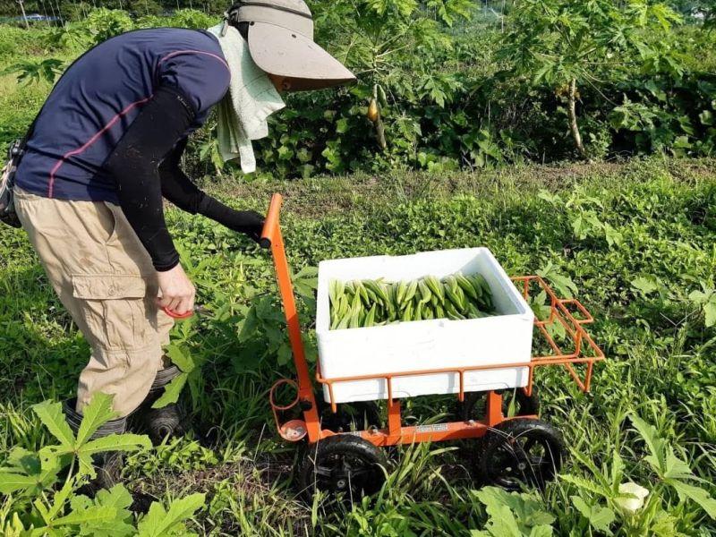 ▲新竹橫山、尖石鄉的小農,疫情期間透過Line群組,將食材與便當銷售往市區。(圖/徐陶真提供)