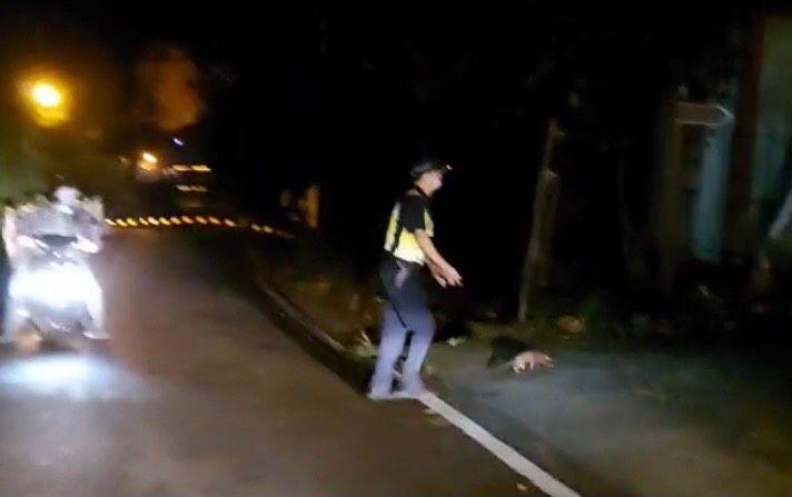 保育類「穿山甲」路上閒晃 員警好心護送跑給警察追