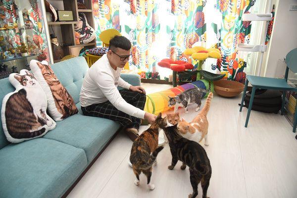 ▲辛卡米克的家十足貓奴,擺放各種貓跳台跟貓抓板!(圖/寵毛網,記者陳明安攝)