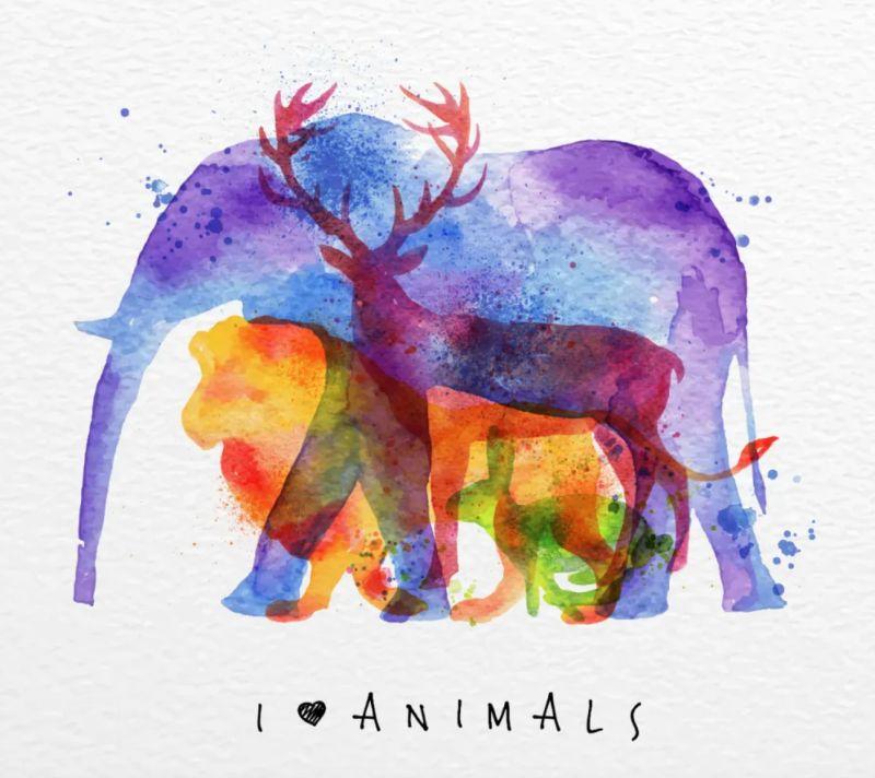 ▲第一眼看到什麼動物?秒測你的內外性格。(圖/翻攝自塔羅牌艾菲爾老師