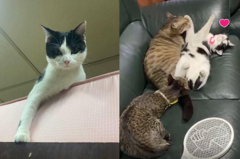 影/貓哥們幫小賓士「舔手腳」 媽傻眼:帝王待遇?