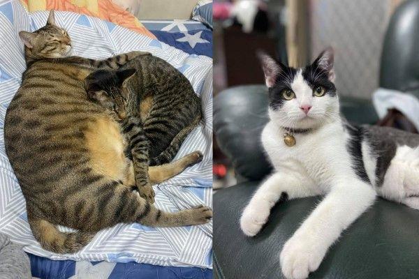 ▲網友陳默默養了三隻貓咪,由左而右分別是老大「班班」,老二「阿飛」以及老么「豆摩」。(圖/網友陳默默授權提供)