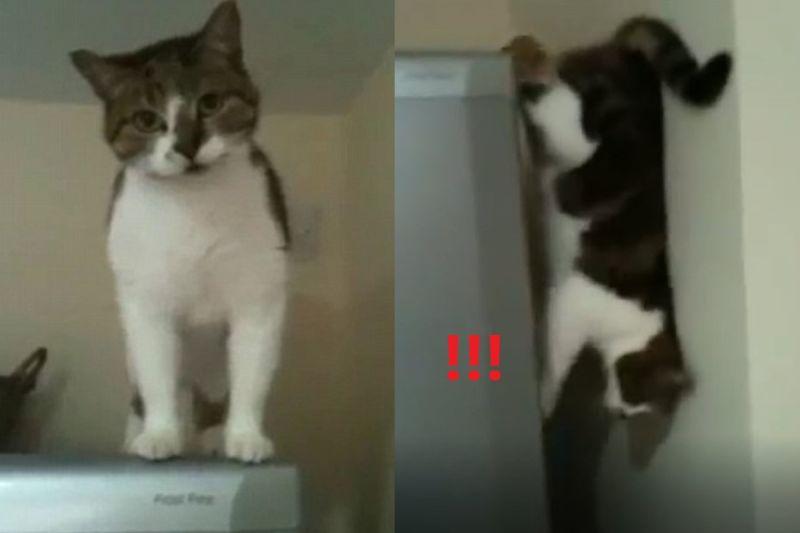 ▲英國一隻貓咪竟然從冰箱與牆壁縫隙垂直大縱走!(圖/美聯社AP+Jukin Media授權)