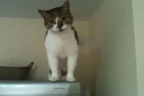 ▲這天Piggy站在冰箱上,發現奴才叫牠……(圖/美聯社AP+Jukin