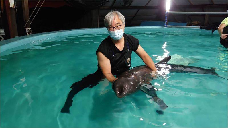 成大鯨豚中心接獲鯨豚事件通報立即展開救援