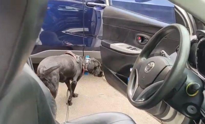 ▲警犬Tiny建功,聞到毒品藏在這裡…(圖/記者鄧力軍翻攝)