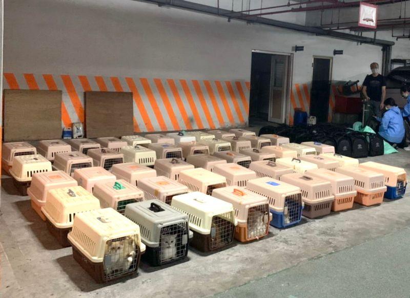 ▲海巡署查獲漁船走私154隻品種貓隻,昨(21)日下午已全數安樂死,引起社會各界爭論。(圖/海巡署偵防分署高雄查緝隊提供)