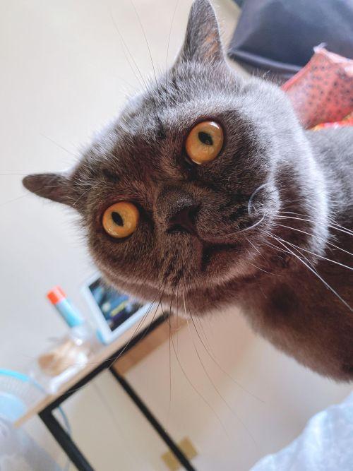 ▲貓貓天生擁有一張愁眉不展的臉蛋。(圖/網友松噯授權提供)