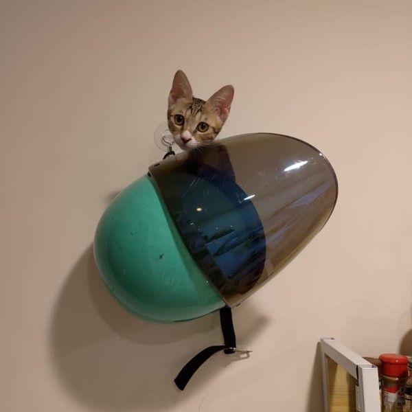 ▲日前Eva睡醒後找不到貓,心急之下她撥貓砂試圖吸引牠出現,沒想到掛在牆上的安全帽竟然出現呼嚕聲!(圖/粉專喵星人襪襪小姐授權提供)