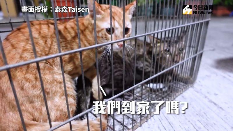 ▲TNVR為目前世界各國處理流浪犬貓問題採取的主要手段之一。(圖/泰森Taisen 授權)