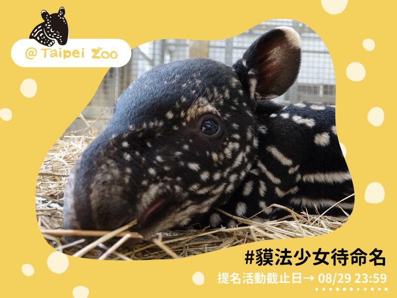 ▲(圖/翻攝自台北市立動物園)
