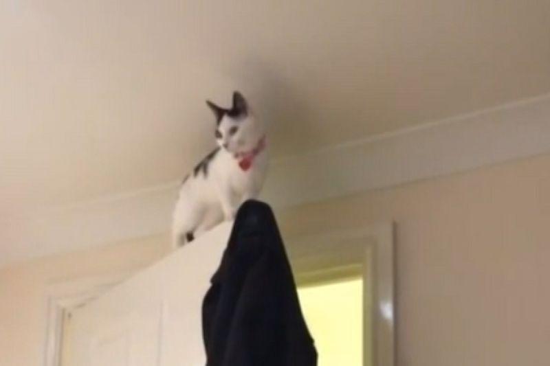 ▲黑白貓被困門框,最後失足竟仍保持霸氣態度!(圖/AP+ Jukin Media)