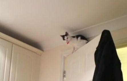 ▲貓咪被困上頭,不知該何去何從。(圖/AP+