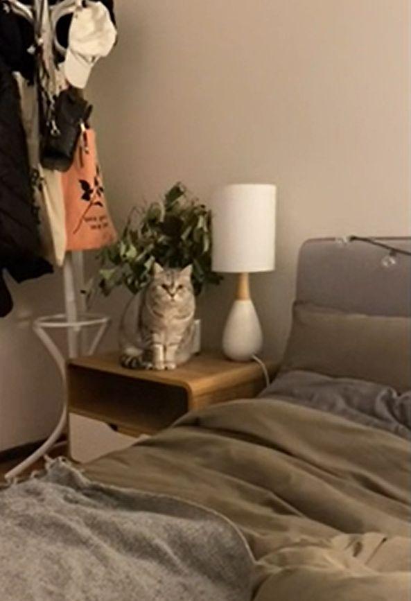 ▲旁邊的貓露出警戒的視線。(影/美聯社AP+Newsflare授權)