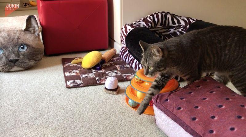 ▲貓咪看見家中有一顆貓咪模樣的抱枕,長得太像自己,嚇得不知該如何是好。(圖/AP美聯社)