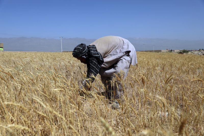 嚴重乾旱衝擊阿富汗農民 聯合國籲各界援助