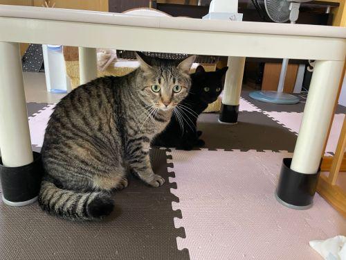 ▲轟隆轟隆的聲音讓貓咪們非常害怕!(圖/Twitter帳號:yonasawa)