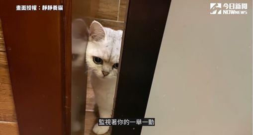 影/貓咪為何愛偷看人洗澡?2因素解謎貓咪行為