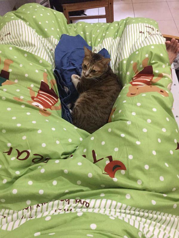 ▲腿硬開讓貓一起睡。(圖/FB帳號海賊貓Luffy的生活日記授權)