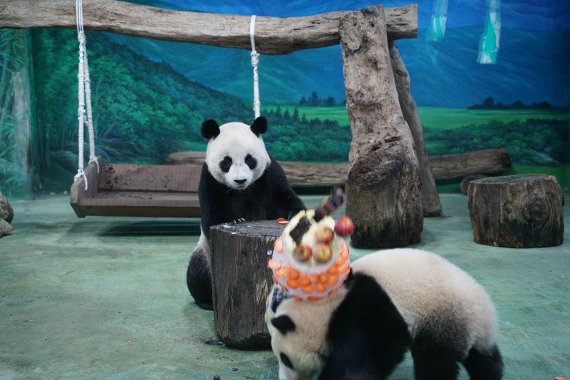 ▲圓寶:媽呀!你切蛋糕的方式太豪邁了吧!?(圖/Taipei