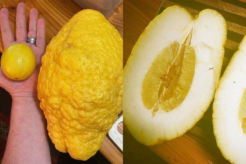 ▲帕林卡斯發現怪物檸檬不適合榨成果汁,比較適合當沙拉醬使用。(圖/翻攝自《@melisspalinkas》IG)