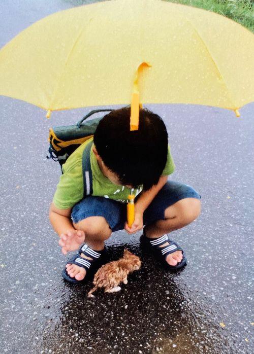 ▲十年前小男孩在路上遇到一隻無助的小貓。(圖/Twitter帳號:pyonta_F)