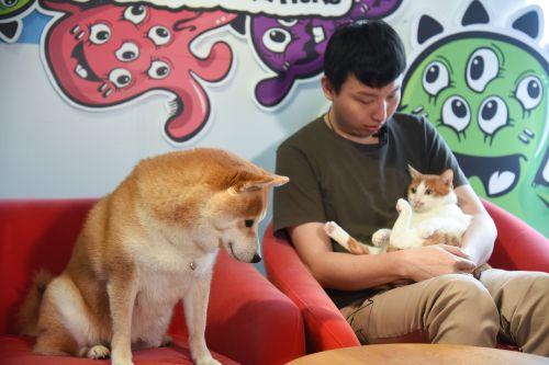 ▲貓咪「橘寶」的眼睛忍不住一直盯著姐姐看!(圖/寵毛網拍攝)