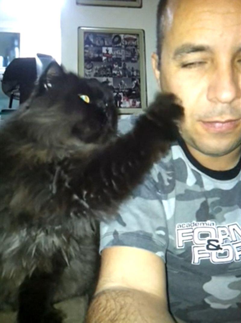 ▲貓咪:「把拔摸我!」。(影/美聯社AP+Jukin