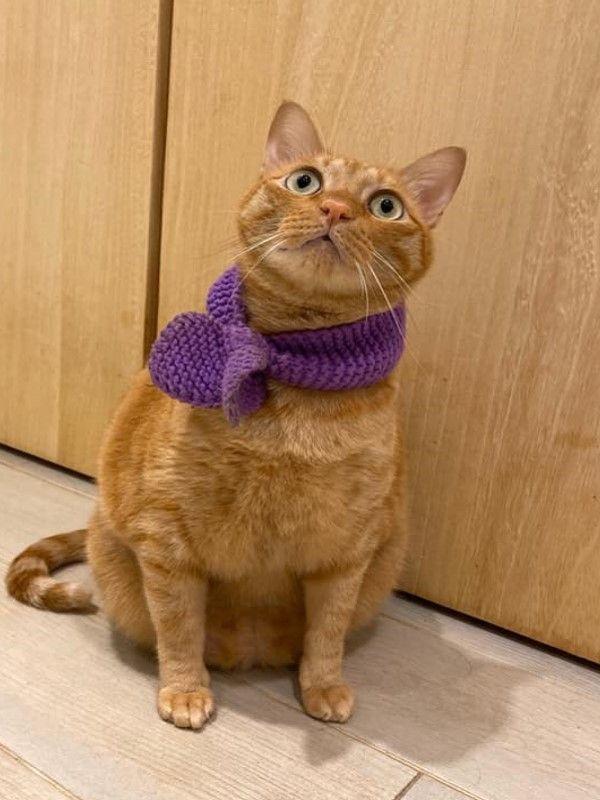 ▲Dika:人家走的是氣質路線,是「貓勇俊」好嗎?(圖/網友Mila