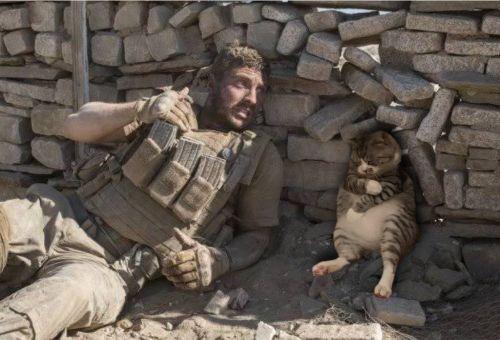 ▲有網友將推主的貓貓P到戰場上也無違和。(圖/Twitter帳號:mr_onabassion)