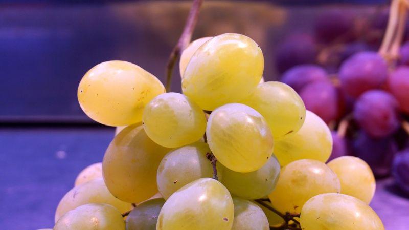 ▲一票老饕認為「麝香葡萄」才是水果中的王者。(示意圖/翻攝自Pixabay)