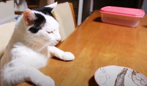 ▲小魚遞上後貓咪一動都不動。(圖/Youtube帳號:かご猫